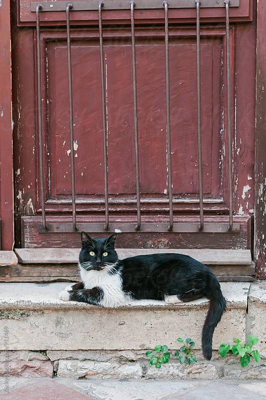 A portrait of a kitten by Zocky for Stocksy United