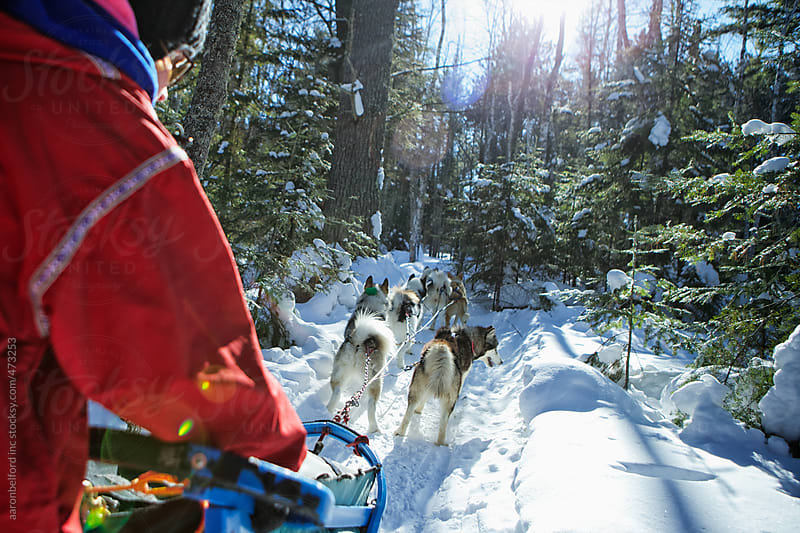 Dog Sledding by aaronbelford inc for Stocksy United