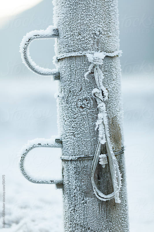 Frozen pole by Robert Kohlhuber for Stocksy United