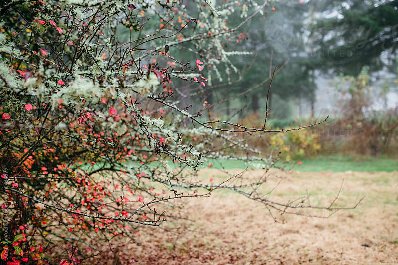 A Moss covered tree with red leaves by Amanda Voelker for Stocksy United