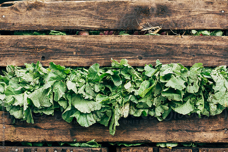 Wooden crate filled with greens by Kristin Duvall for Stocksy United
