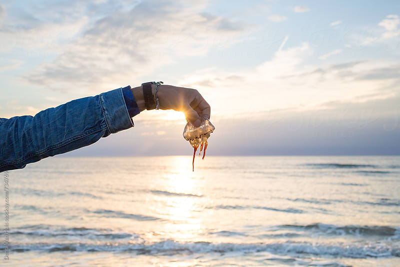 Holding washed up jellyfish on the beach by Denni Van Huis for Stocksy United