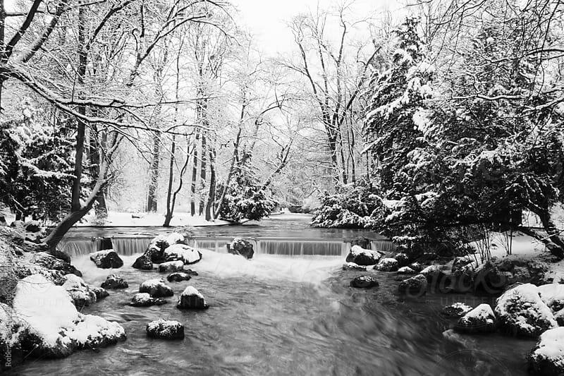 Winter park by Robert Kohlhuber for Stocksy United