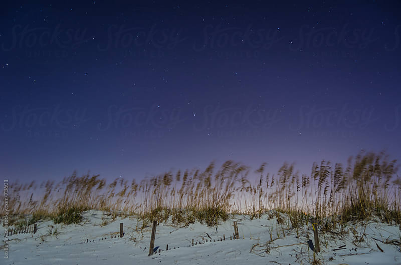 Stars Over A White Sand Beach by Leslie Taylor for Stocksy United