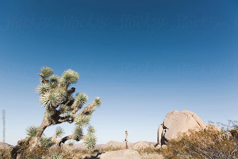 A  woman stands on a boulder in the desert next to a Joshua Tree. by Holly Clark for Stocksy United