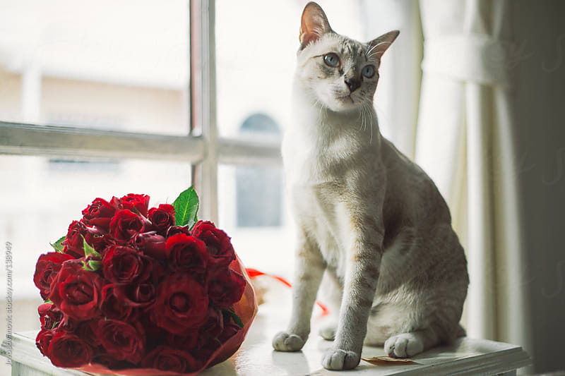 Cat sitting next to a rose bouquet.  by Jovo Jovanovic for Stocksy United