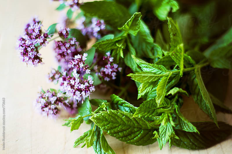Fresh herbs by Helen Rushbrook for Stocksy United