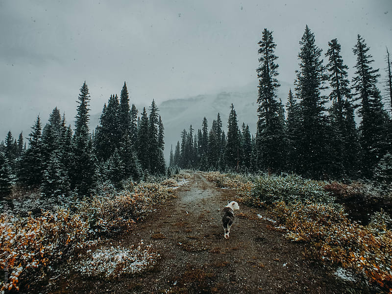 Dog walking down path in the snow by Ariana Babcock for Stocksy United