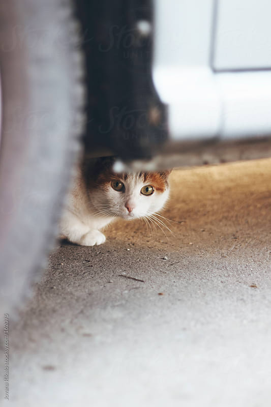 Cat is hiding under the car by Jovana Rikalo for Stocksy United
