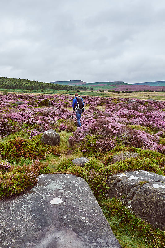 Male walking with his dog through heather on a remote hillside. Derbyshire, UK. by Liam Grant for Stocksy United