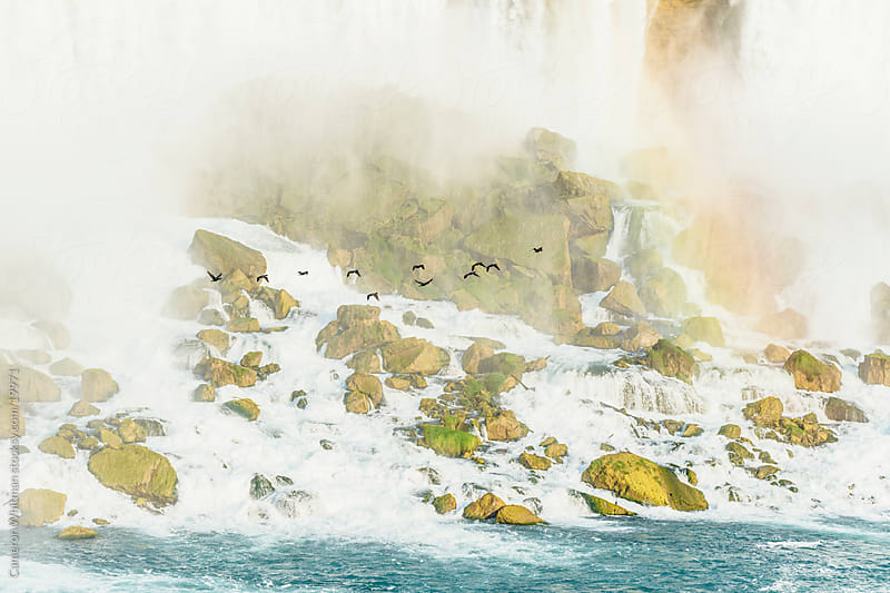Birds Flying In The Mist, Niagara Falls  by Cameron Whitman for Stocksy United