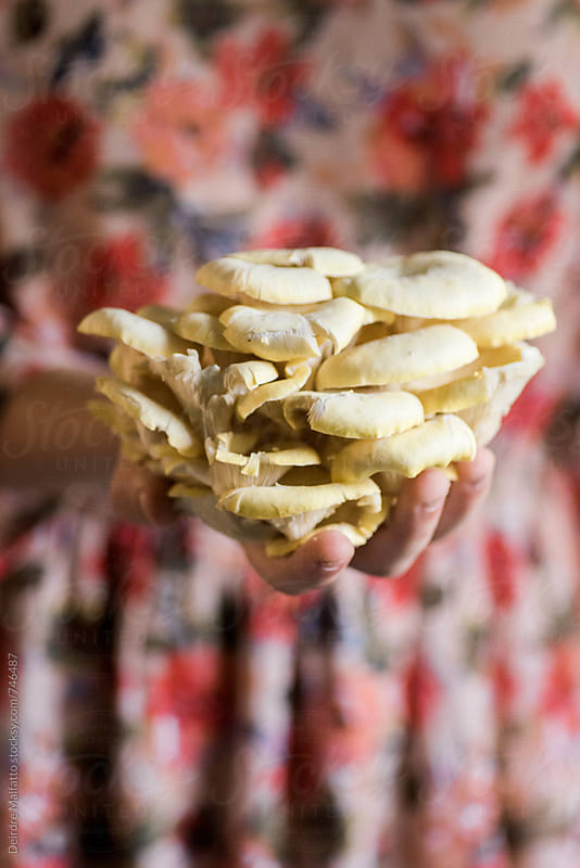 girl's hand holding oyster mushrooms by Deirdre Malfatto for Stocksy United
