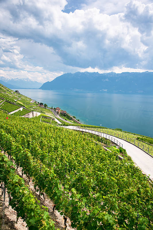 Vineyards of Lavaux at Lake Geneva. by Peter Wey for Stocksy United