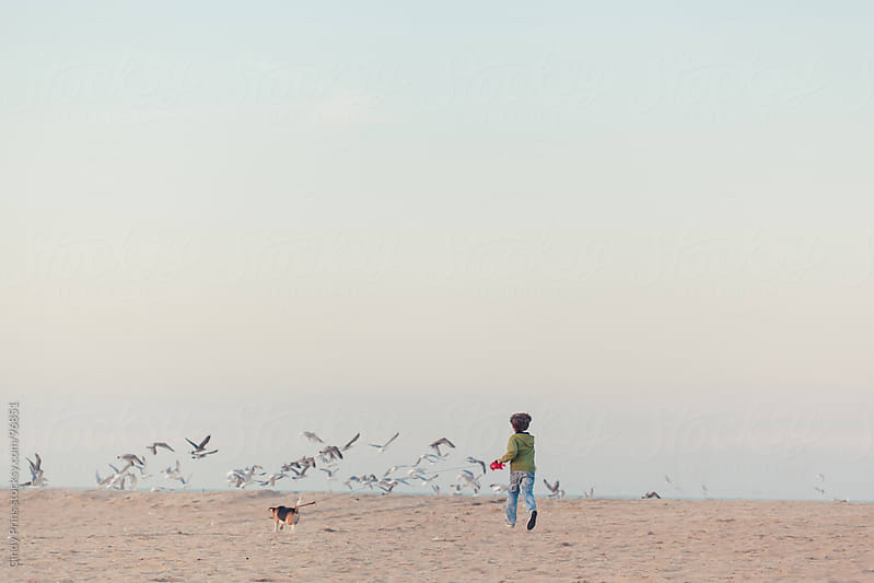 Boy with a beagle dog on a leash running towards seagulls on the beach by Cindy Prins for Stocksy United