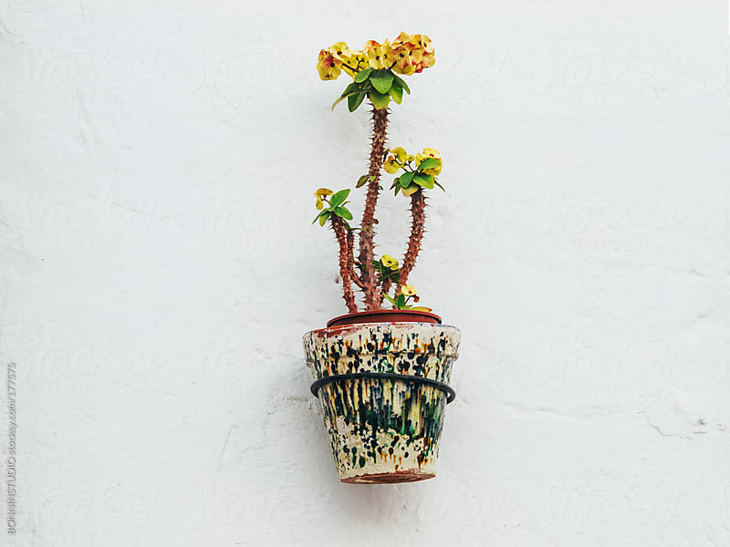 Hanging plants on street walls of Almeria, Spain. by BONNINSTUDIO for Stocksy United