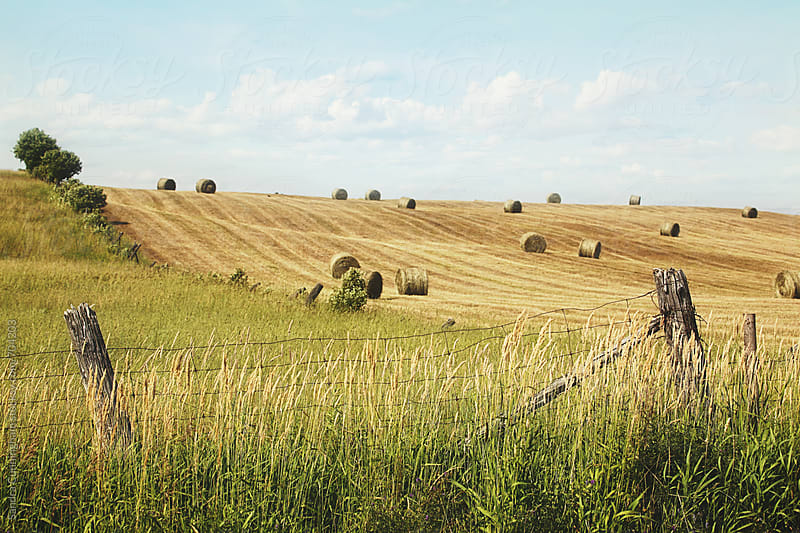 Harvest time with bales of hay  by Sandra Cunningham for Stocksy United
