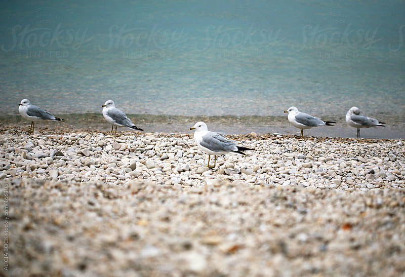 Seagulls on the Shore by ALICIA BOCK for Stocksy United