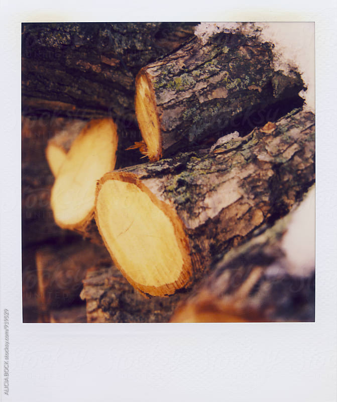Polaroid Photograph Of Stacked Logs  by ALICIA BOCK for Stocksy United