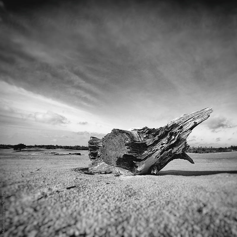 Tree strump in desertlike landscape by Marcel for Stocksy United