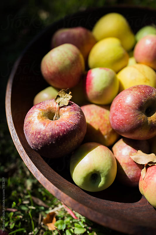 Fall Apples in bowl - digital file by Andrew Cebulka for Stocksy United
