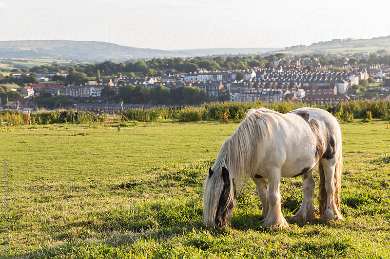 Horse grazing on the outskirts of a town by Marilar Irastorza for Stocksy United
