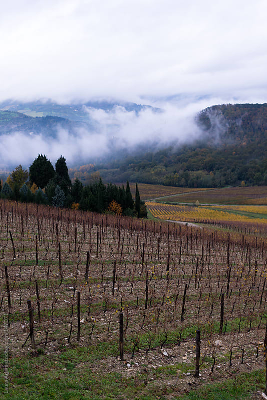 Tuscany vineyard view in autumn by Laura Adani for Stocksy United