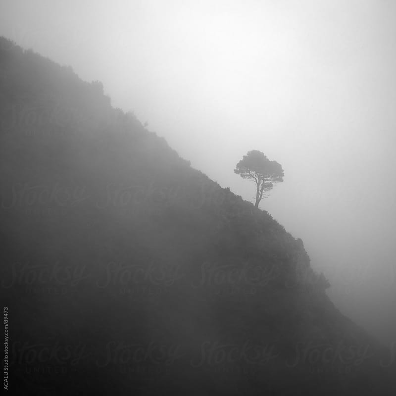 Gray lone tree on the side of the mountain by ACALU Studio for Stocksy United
