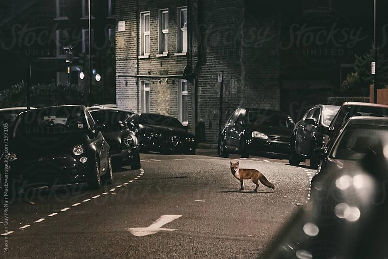 Fox Hunting by Maximilian Guy McNair MacEwan for Stocksy United