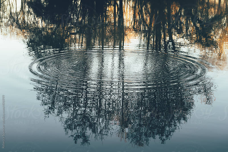 Trees reflected in the surface of a lake by Rebecca Spencer for Stocksy United