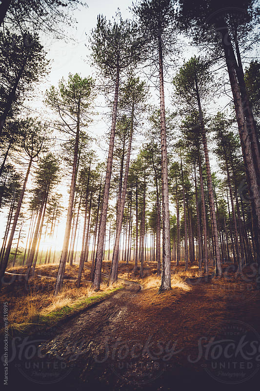 Wide angle portrait shot of a forest trail at golden hour by Maresa Smith for Stocksy United