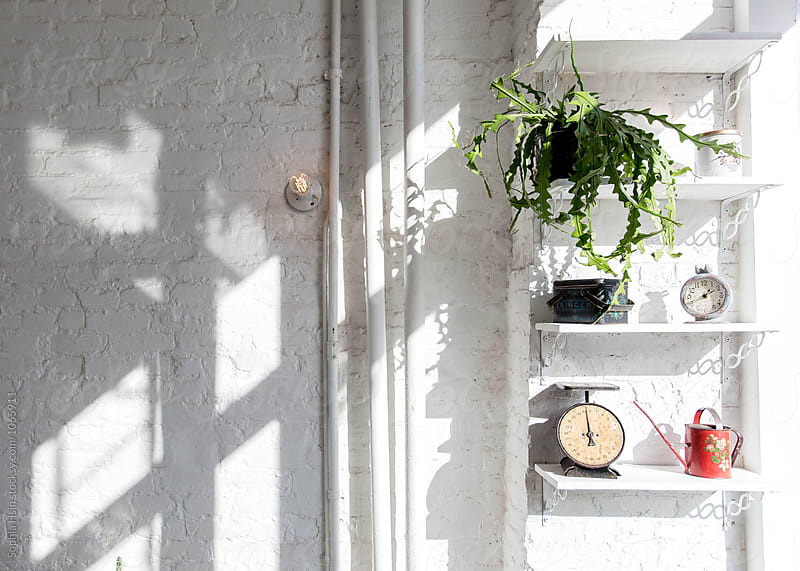 Plant on white shelf with props by Sophia Hsin for Stocksy United