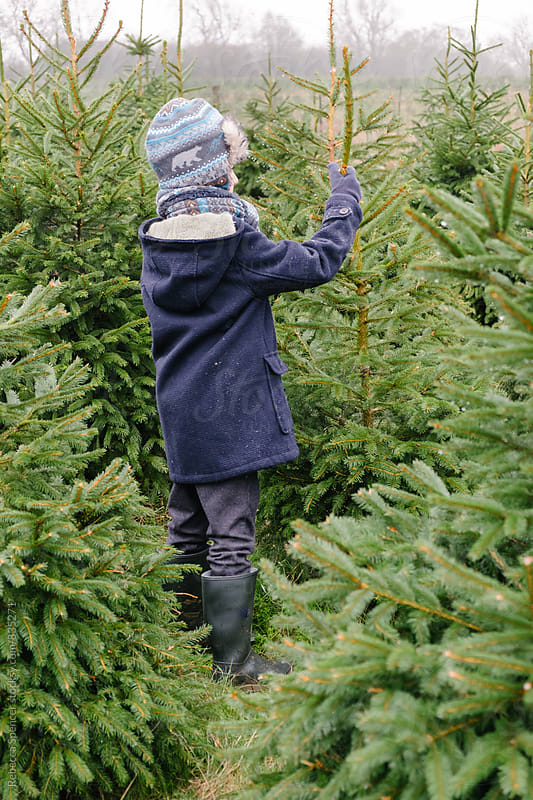 Young boy holds the branch of fir tree by Rebecca Spencer for Stocksy United