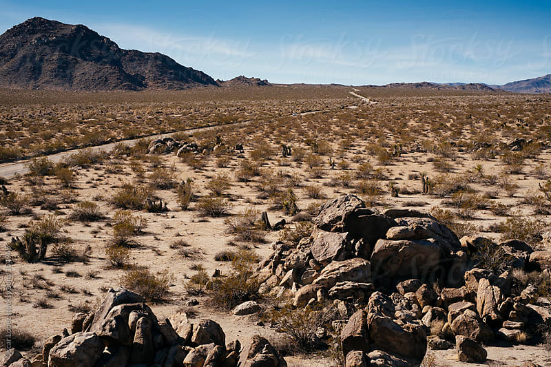 Desert road by Oscar Lopez for Stocksy United