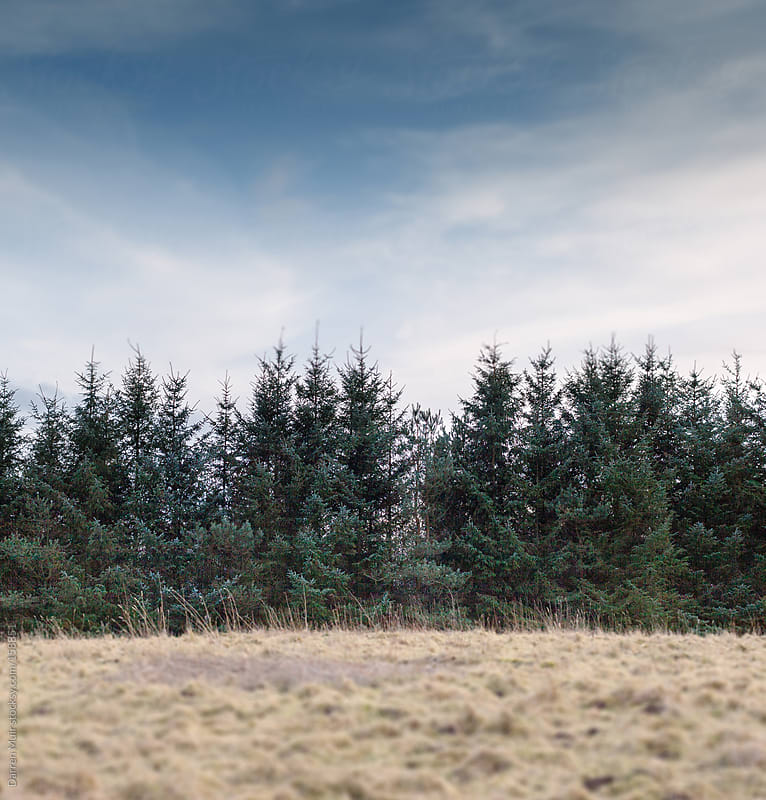 Forest and sky. by Darren Muir for Stocksy United