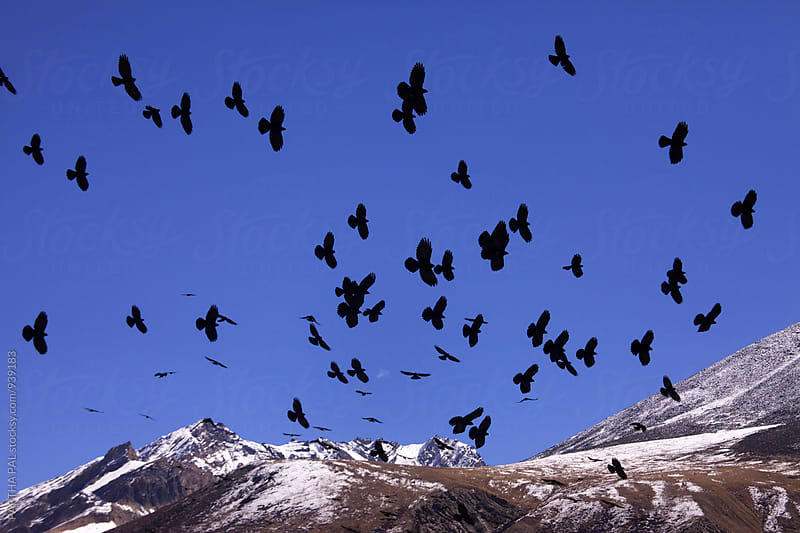 Birds Flying over Mountain by PARTHA PAL for Stocksy United
