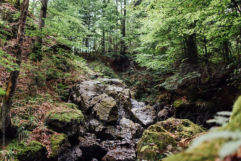 Small forest creek surrounded with trees by Boris Jovanovic for Stocksy United