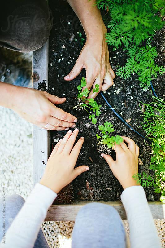 Gardening Photography by Andrew Cebulka for Stocksy United