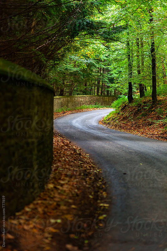 Country road through a forest in Autumn.  by Darren Muir for Stocksy United