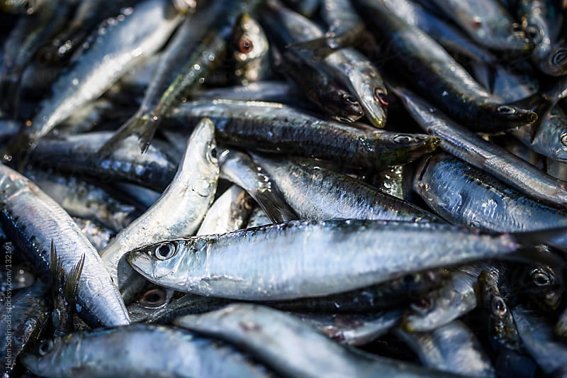 Sardines at the market by Helen Sotiriadis for Stocksy United