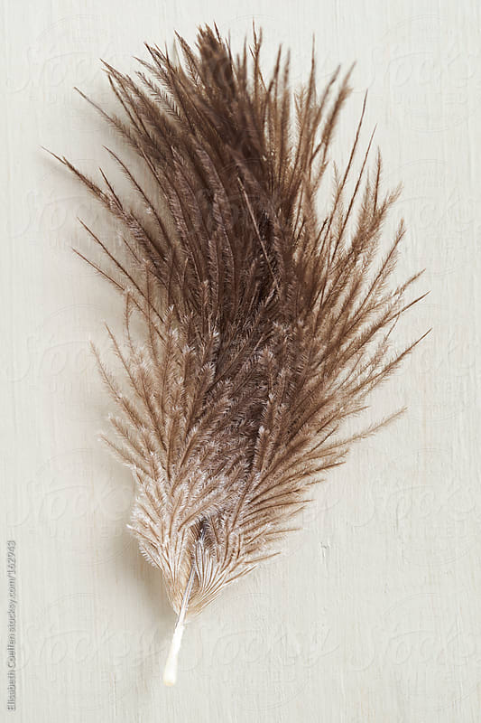 Goose feather by Elisabeth Coelfen for Stocksy United