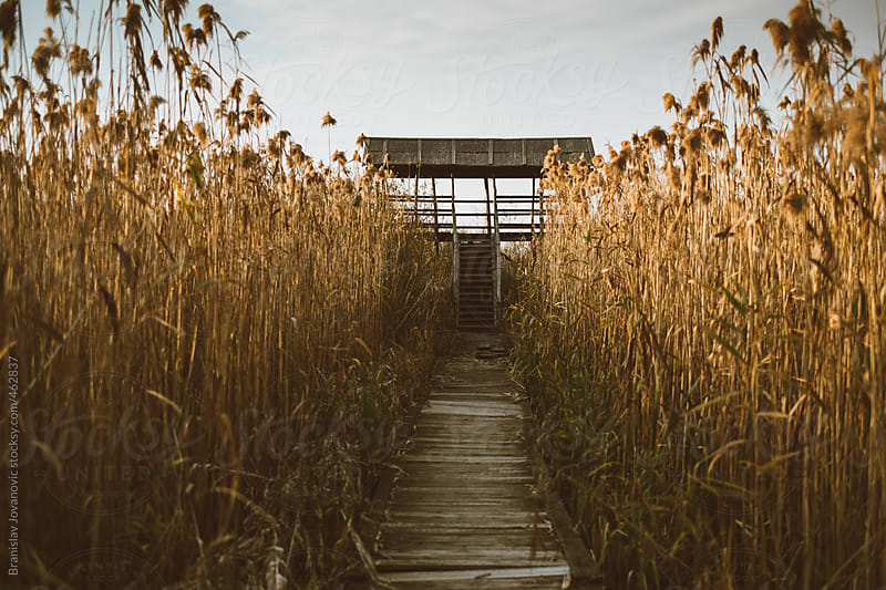 Wooden Path through the Swamp at Sunset by Brkati Krokodil for Stocksy United
