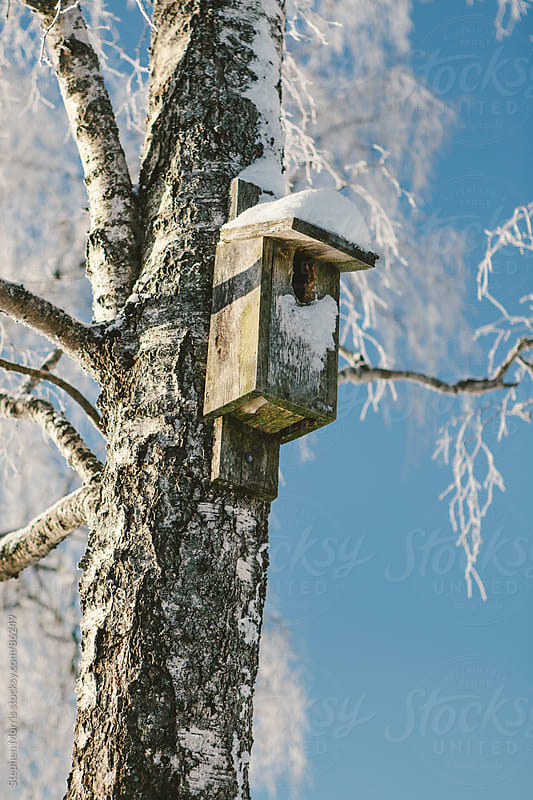 Snowy Tree with Bird House by Stephen Morris for Stocksy United