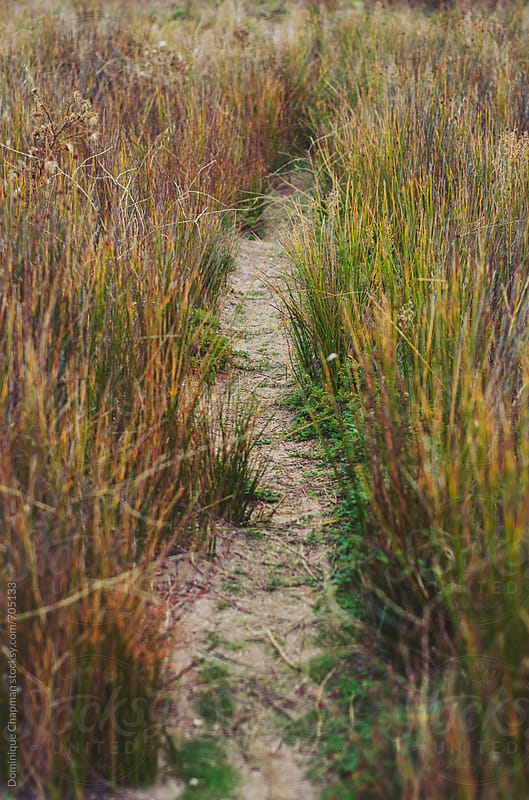 Tiny pathway through grass by Dominique Chapman for Stocksy United