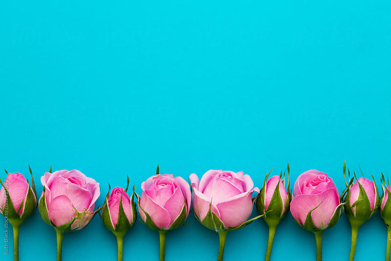 Pink rosebuds against blue by Ruth Black for Stocksy United