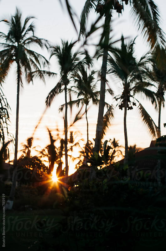 Sunrise behind the silhouette of the palm trees by Beatrix Boros for Stocksy United