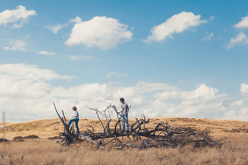 Two boys standing on the branches of a dead fallen tree in a field by Cindy Prins for Stocksy United