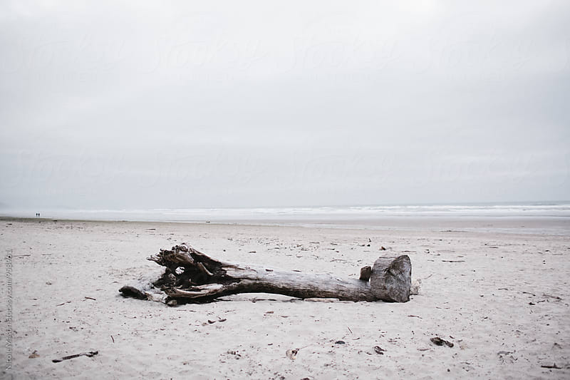 large log on the oregon coast by Nicole Mason for Stocksy United