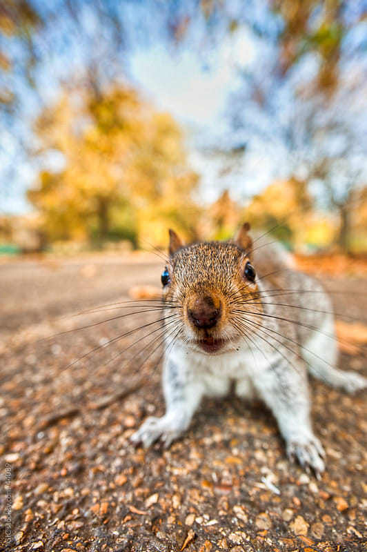 Squirrel colse up by GIC for Stocksy United