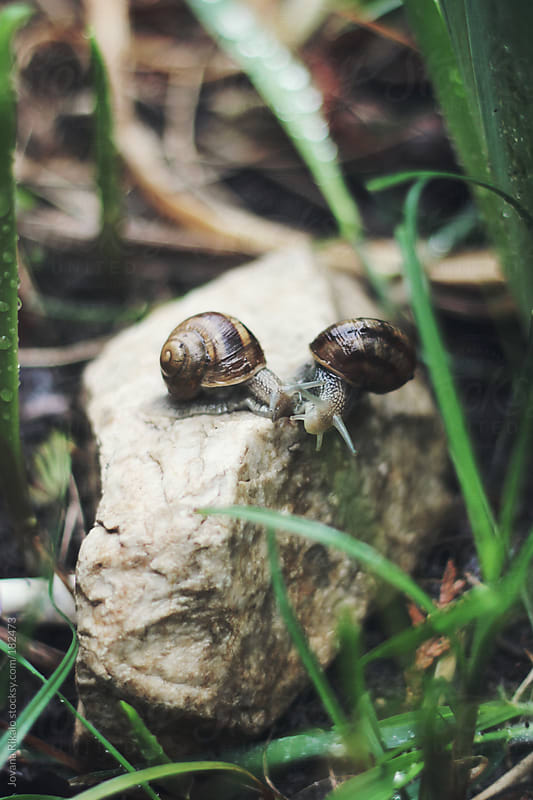 Snail love by Jovana Rikalo for Stocksy United