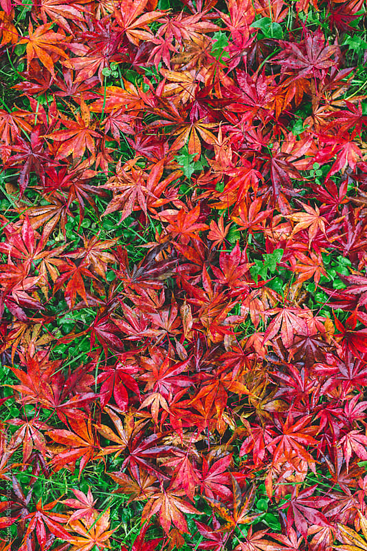 Autumn carpet by Pixel Stories for Stocksy United